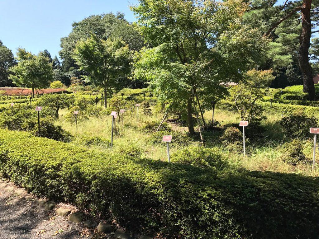神代植物公園 樹木