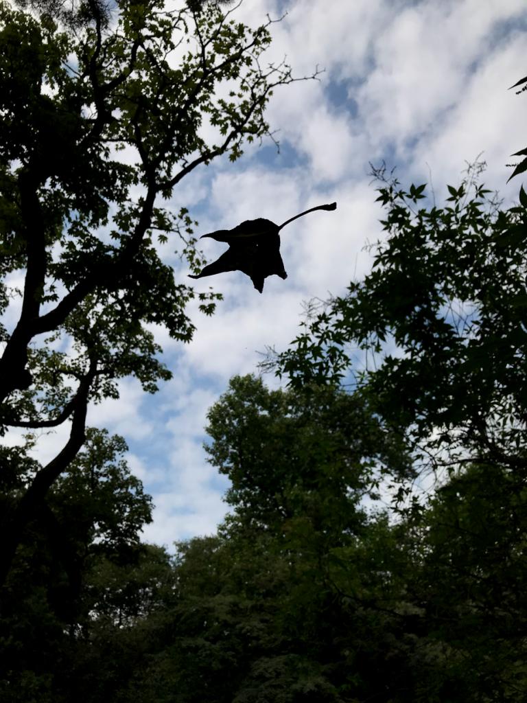 小石川植物園 蜘蛛の巣 葉
