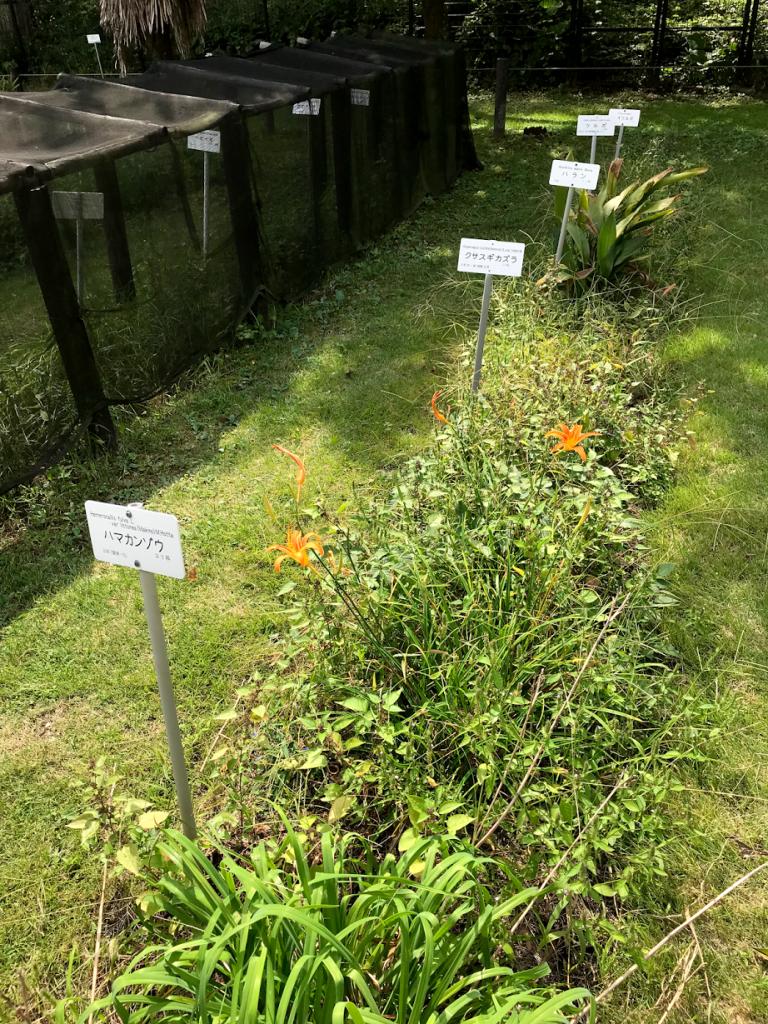 小石川植物園 分類表保温園
