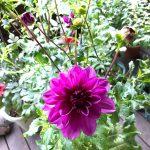 板橋区立熱帯環境植物館 出迎えの花たち