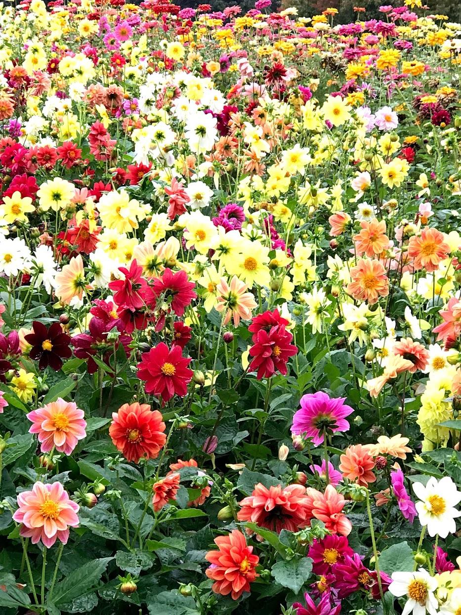 東山植物園 庭の草木