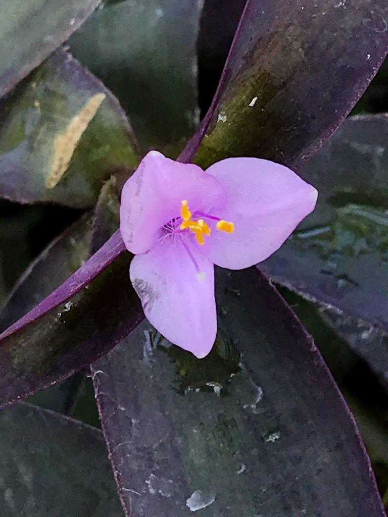 新宿御苑 大温室の花