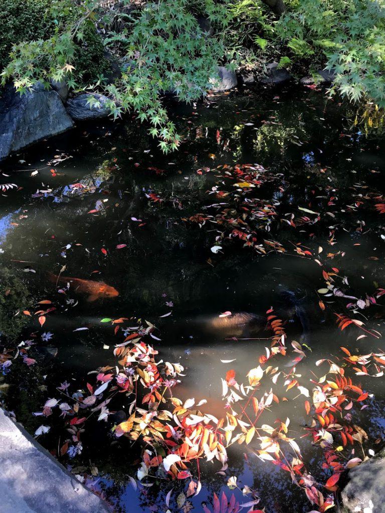 古河庭園 池