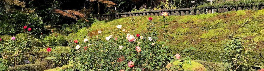 旧古河庭園 バラ園