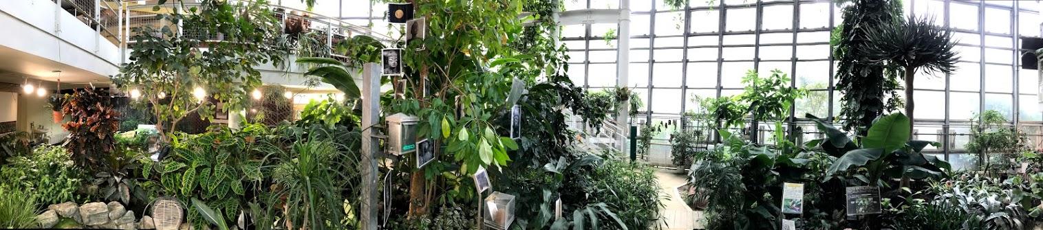 館内一望 渋谷区ふれあい植物センター