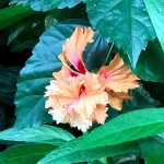 渋谷区ふれあい植物センター 花たち