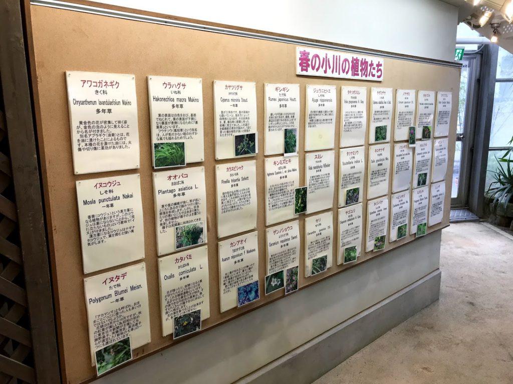 渋谷区ふれあい植物センター 春の小川