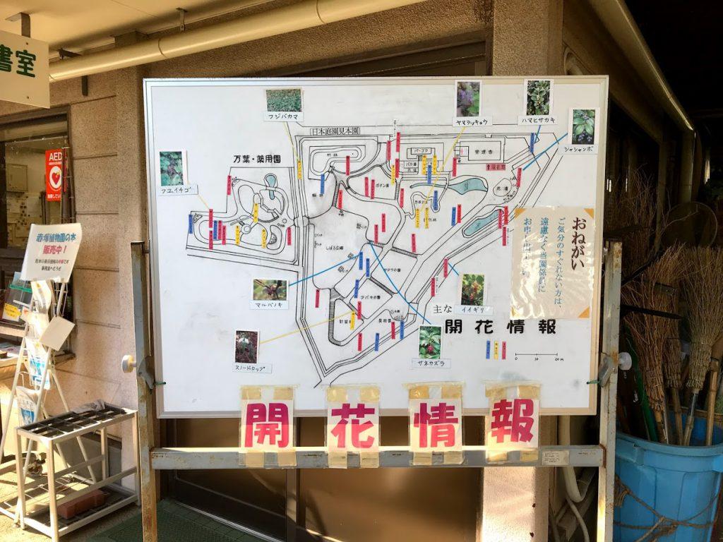 赤塚植物園 開花情報