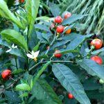 赤塚植物園の花たち