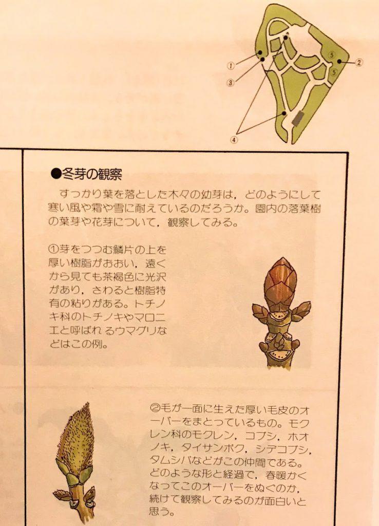 赤塚植物園 植物園の四季