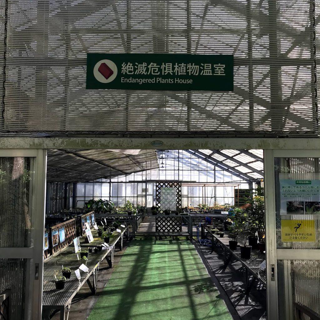 筑波実験植物園 絶滅危惧植物温室