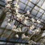 筑波実験植物園 絶滅危惧植物温室の花