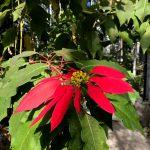 筑波実験植物園 サバンナ温室 花