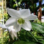 筑波実験植物園 熱帯資源植物温室の花