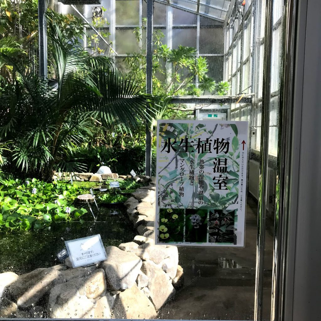 筑波実験植物園 水辺の温室
