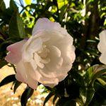 筑波実験植物園 屋外の花
