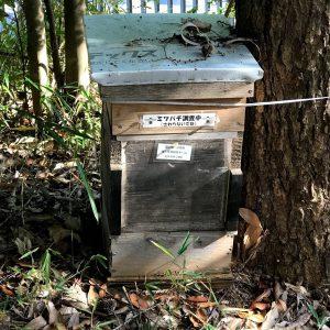 筑波実験植物園 ミツバチ調査