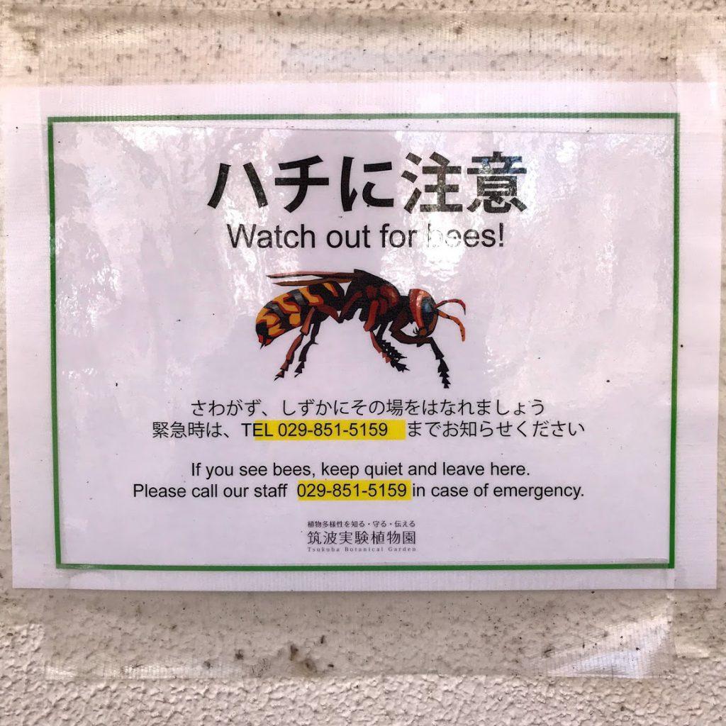 筑波実験植物園 屋外 ハチに注意