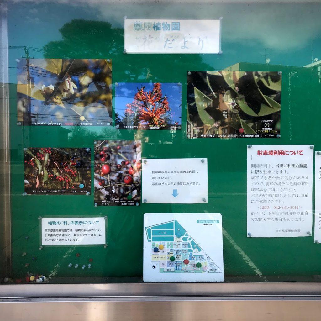 東京都薬用植物園 見頃の花