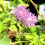 東京都薬用植物園 温室の花たち