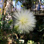 川口グリーンセンター 熱帯温室の花