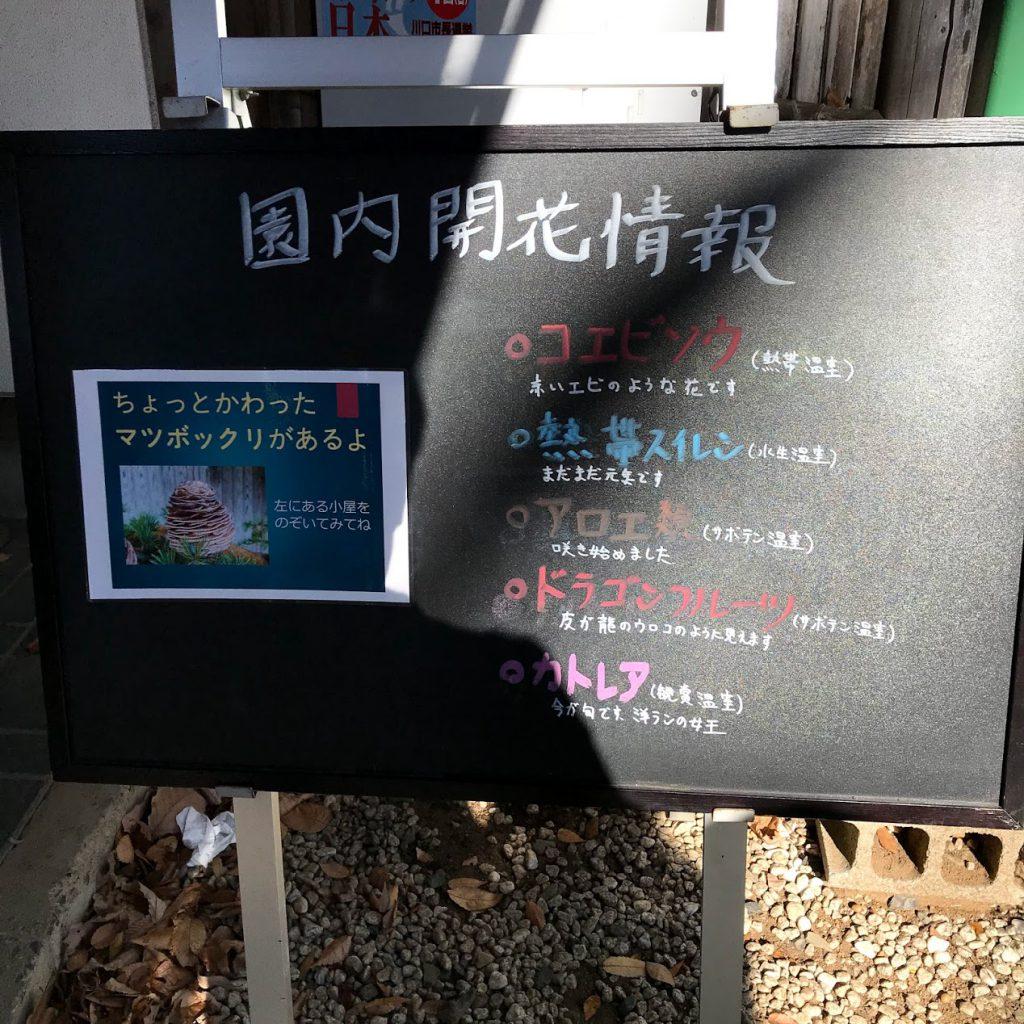 川口グリーンセンター正門 見頃 花