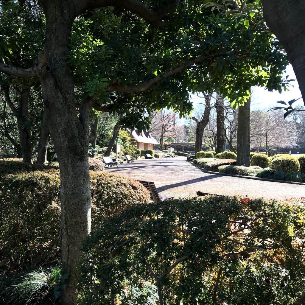 川口グリーンセンター 景色 ベンチ