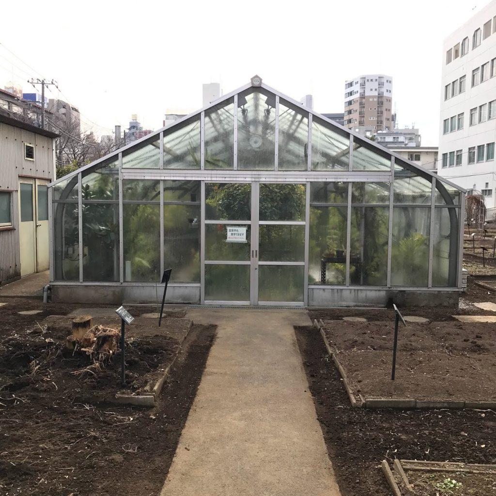 星薬科大学 薬用植物園 温室