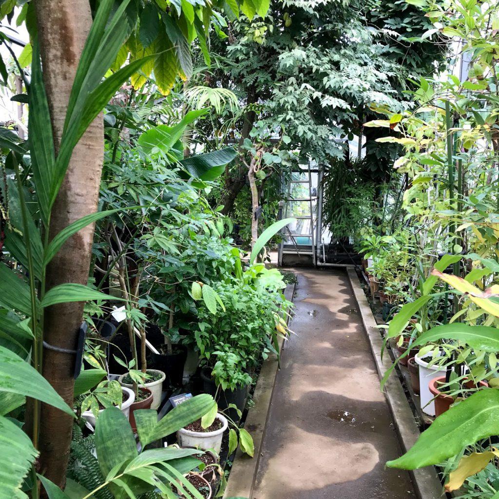 星薬科大学 薬用植物園 温室 室内
