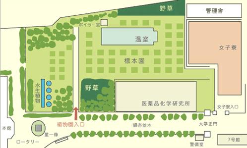 星薬科大学 薬用植物園 案内図