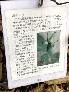 東京大学 突然変異 緑 バラ 標識
