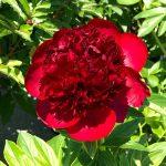 日比谷花壇大船フラワーセンター 花たち
