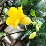 東京都薬用植物園 5月の花たち