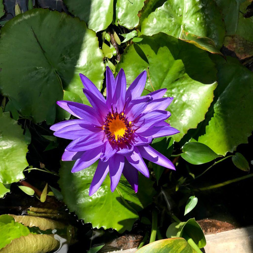 北海道大学植物園温室の花