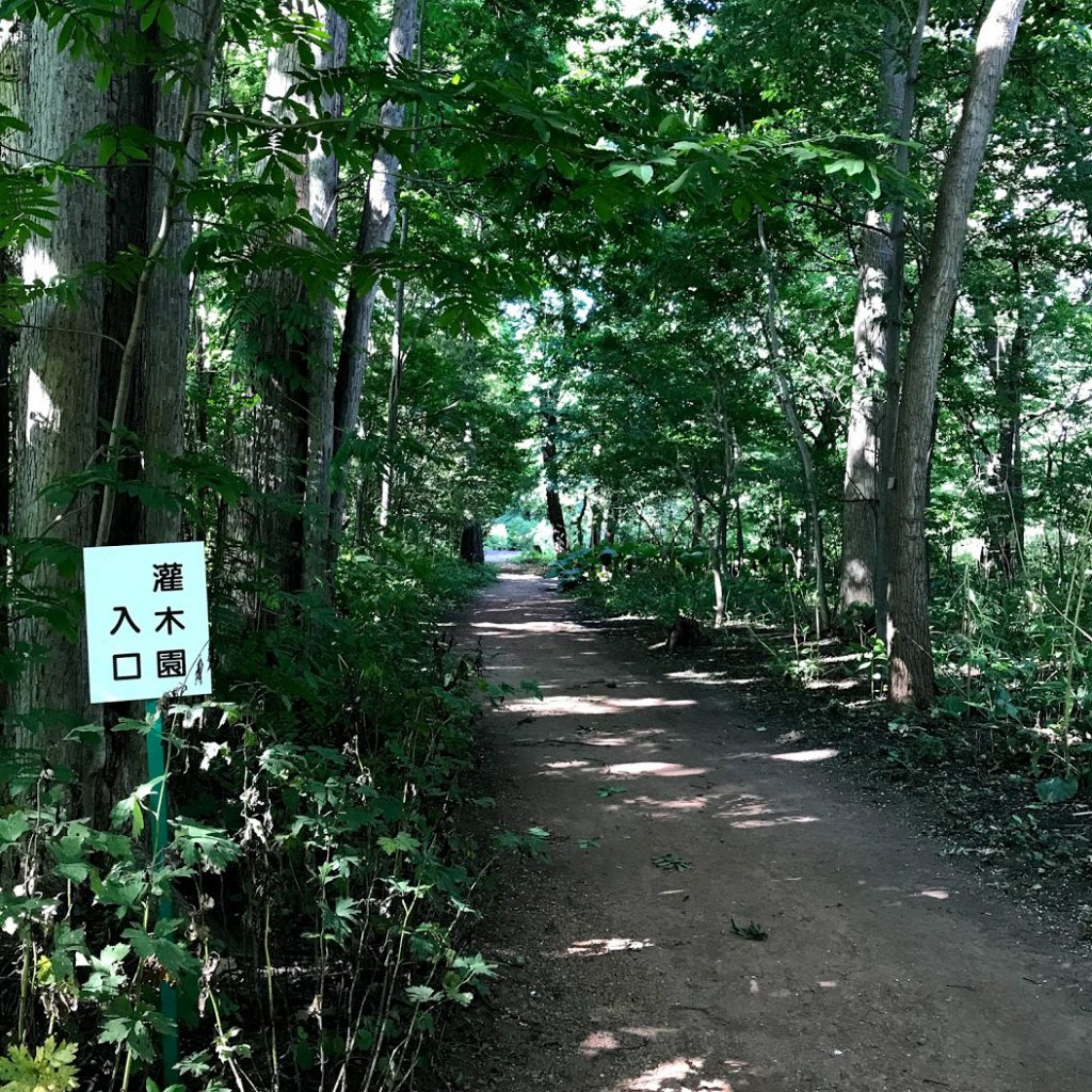 北海道大学植物園の森林