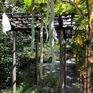 向島百花園の木々草花