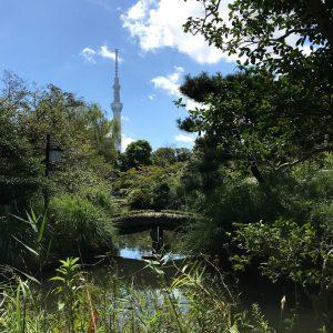 向島百花園から見るスカイツリー