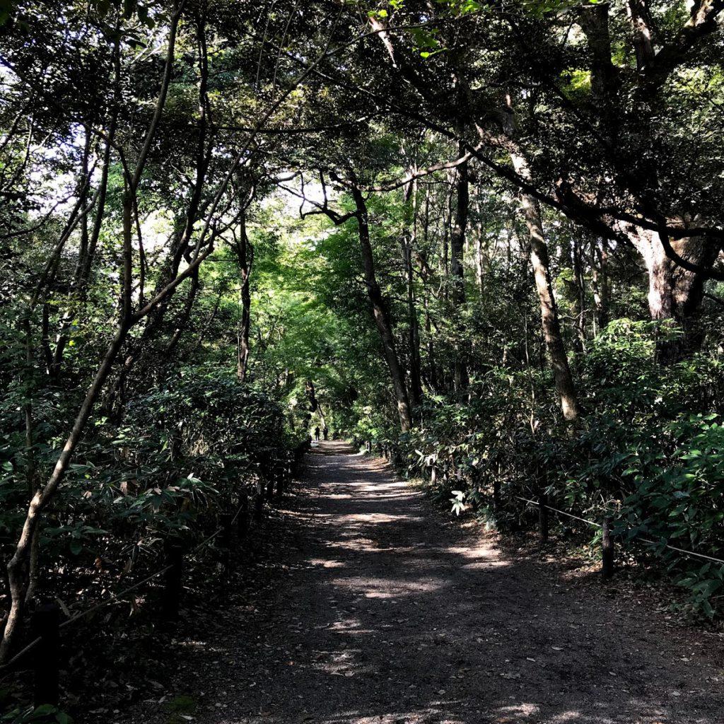 国立科学博物館附属自然教育園 広い 森林