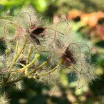 国立科学博物館附属自然教育園 園内の花たち