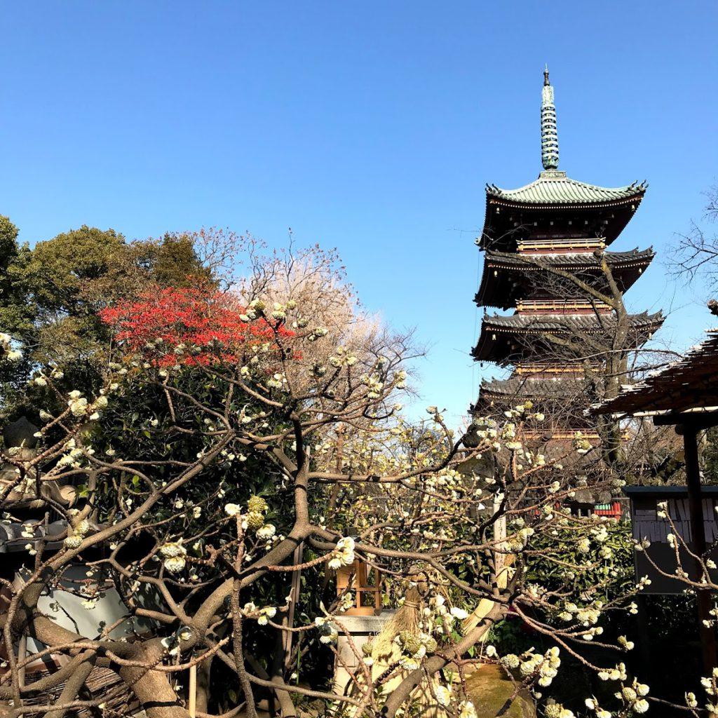 上野東照宮ぼたん苑からの五重塔