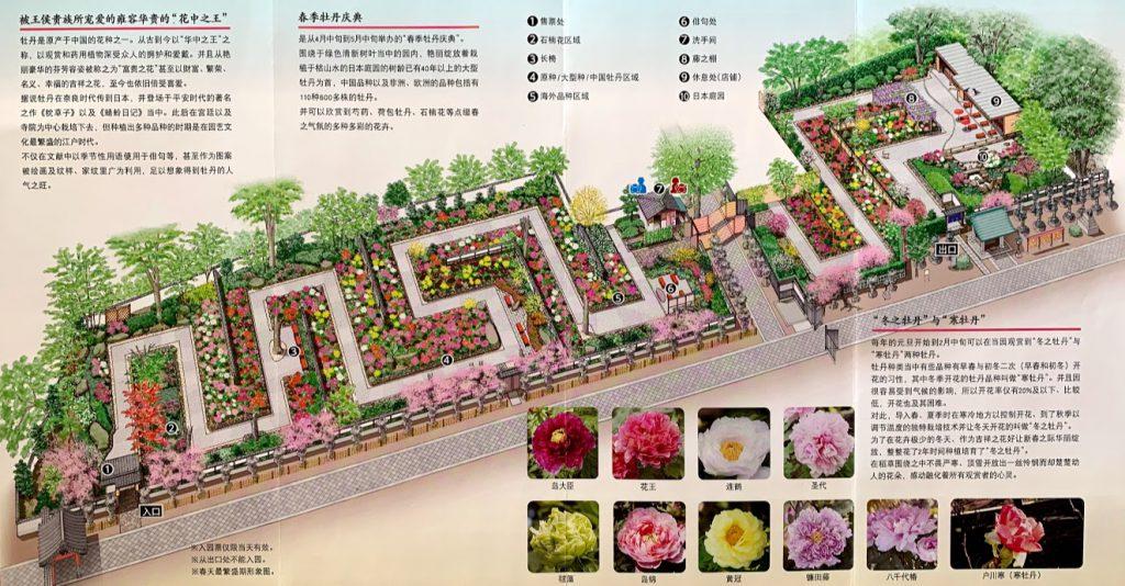 上野東照宮ぼたん苑地図
