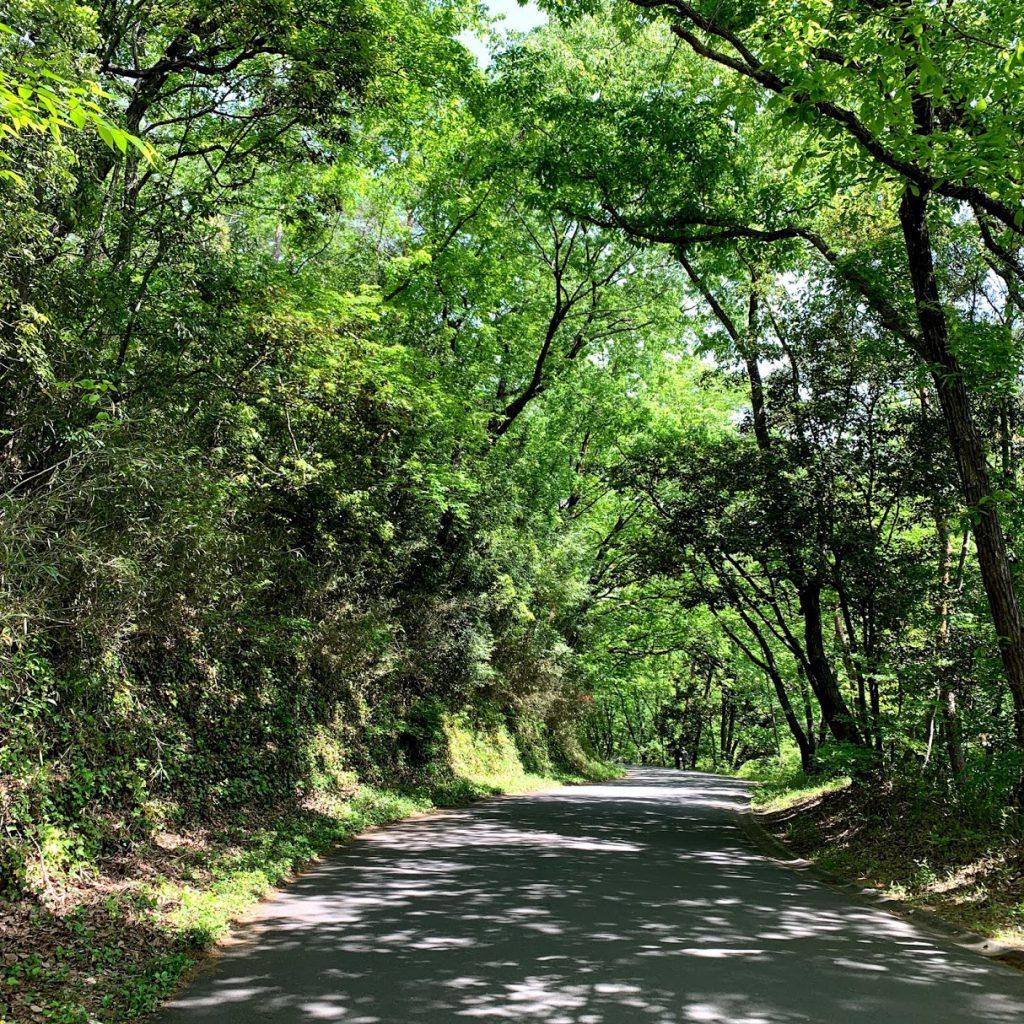 森林公園 緑いっぱい