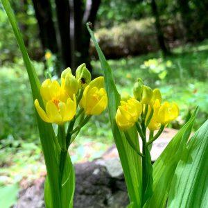 森林公園 5月のはな