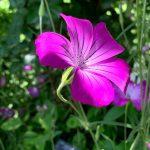 横浜イングリッシュガーデン薔薇以外の花