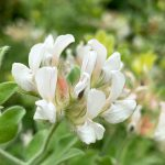 四季の香りローズガーデン 花たち