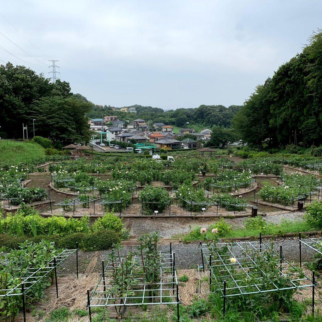 町田ダリア園 全景
