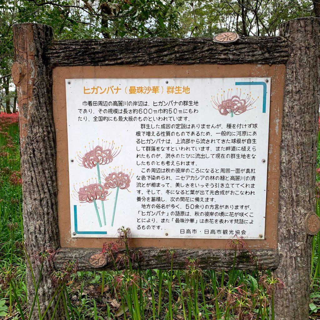 巾着田公園の曼珠沙華の説明
