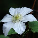 高知県立牧野植物園の花たち