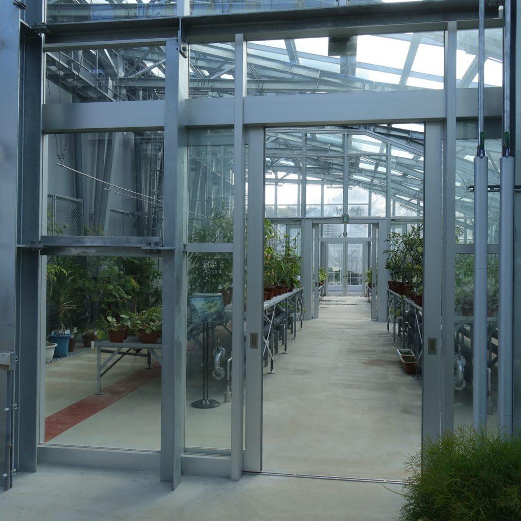 小石川植物園の温室の広い通路