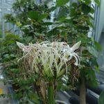 小石川植物園の温室の花